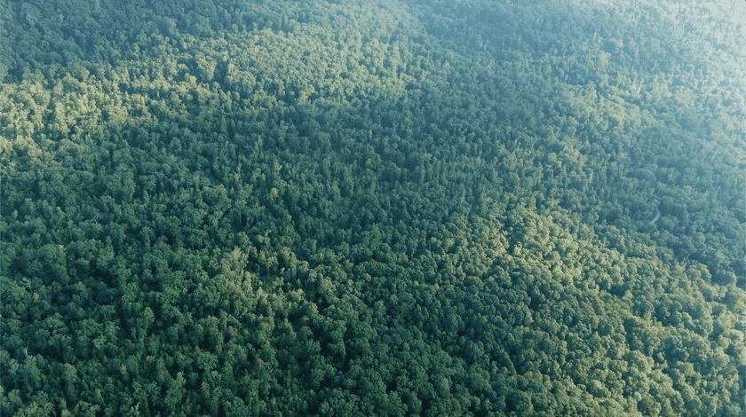 Amazon rainforest trees