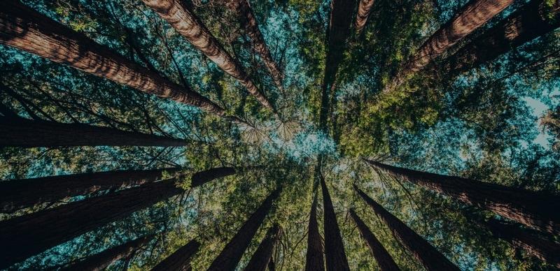Trees_in_sky