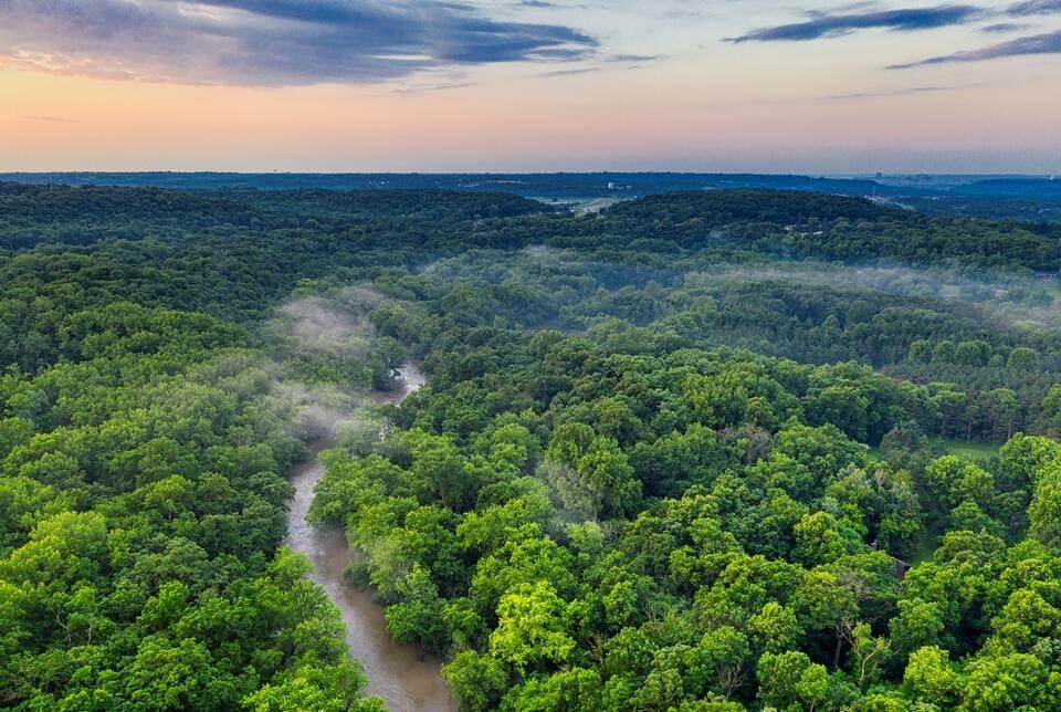 Trees amazon rainforest